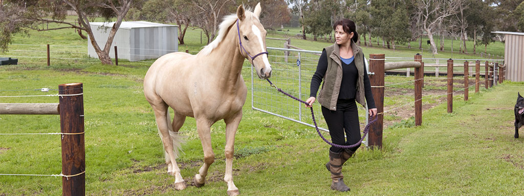 Looking after pets and livestock during bushfires