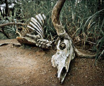 Werribee  Zoo - Part III