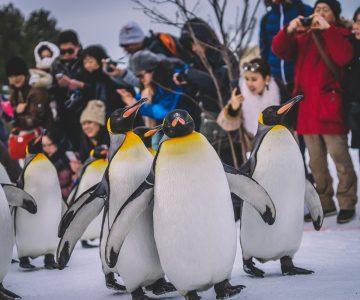 JapanTrip 4.0 - Asahiyama Zoo