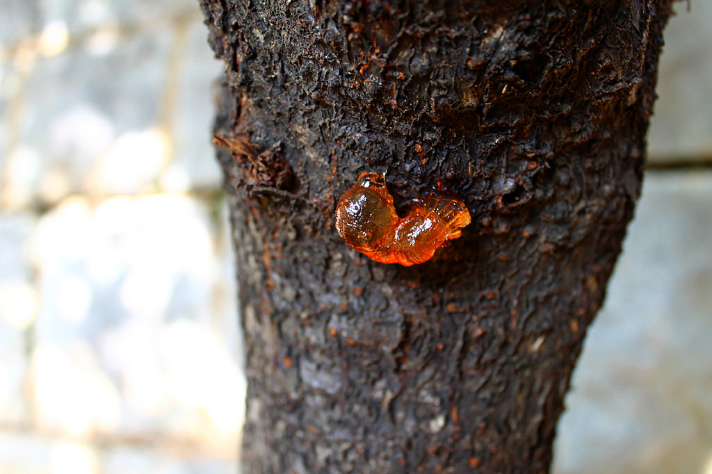 How To Quickly Remove Tree Sap From Your Car Paintwork