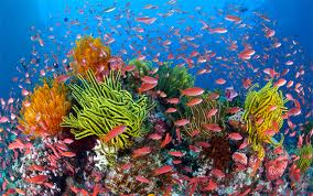 gbr marine life