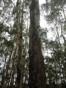 Mooloolah Logging Area-vegetation3