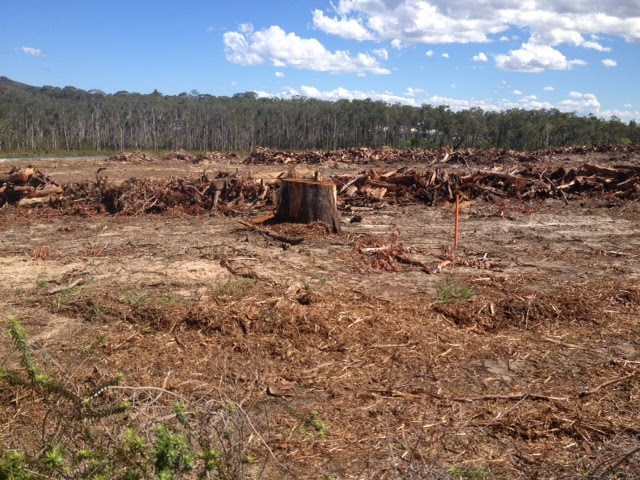 Clearing near Coles-Nov-Dec15
