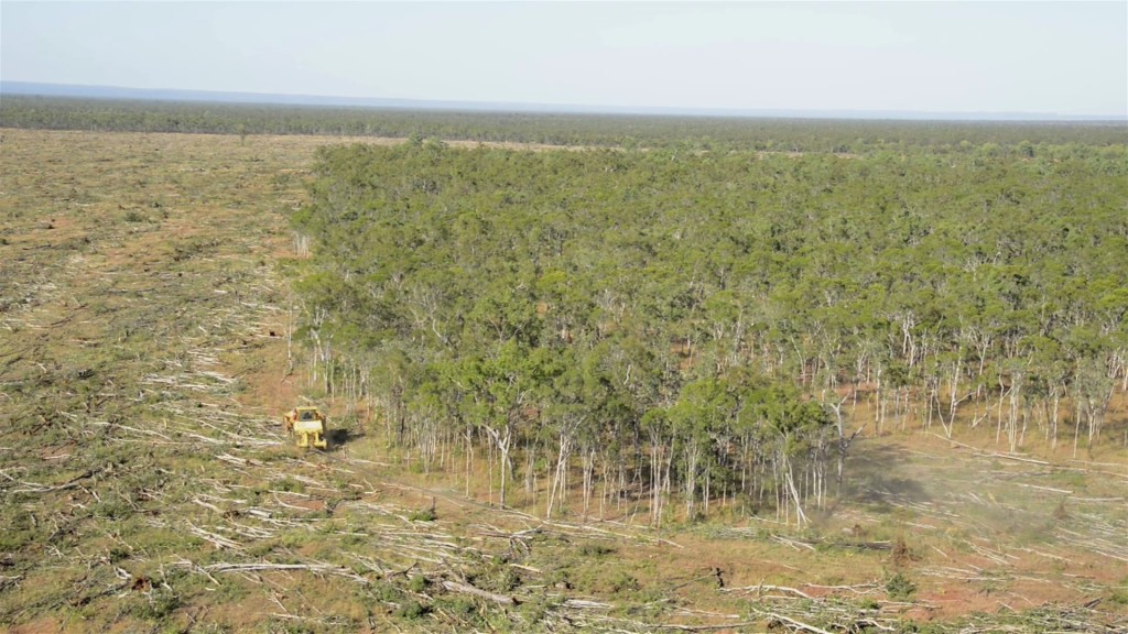 Broadscale landclearing-Olive Vale Station-image The Wilderness Society