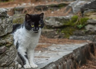 How the cat got its coat (and other furry tails)
