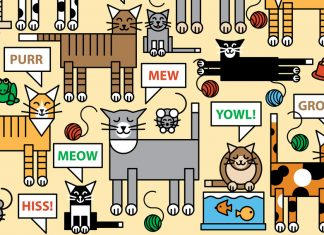 Could the mystery of the meow be solved by a new talking cat collar?