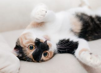 Cat videos lower stress and make you happy