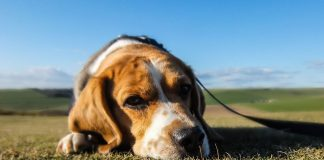 pet A sad dog: Can you recognise signs of stress in your pet at home?