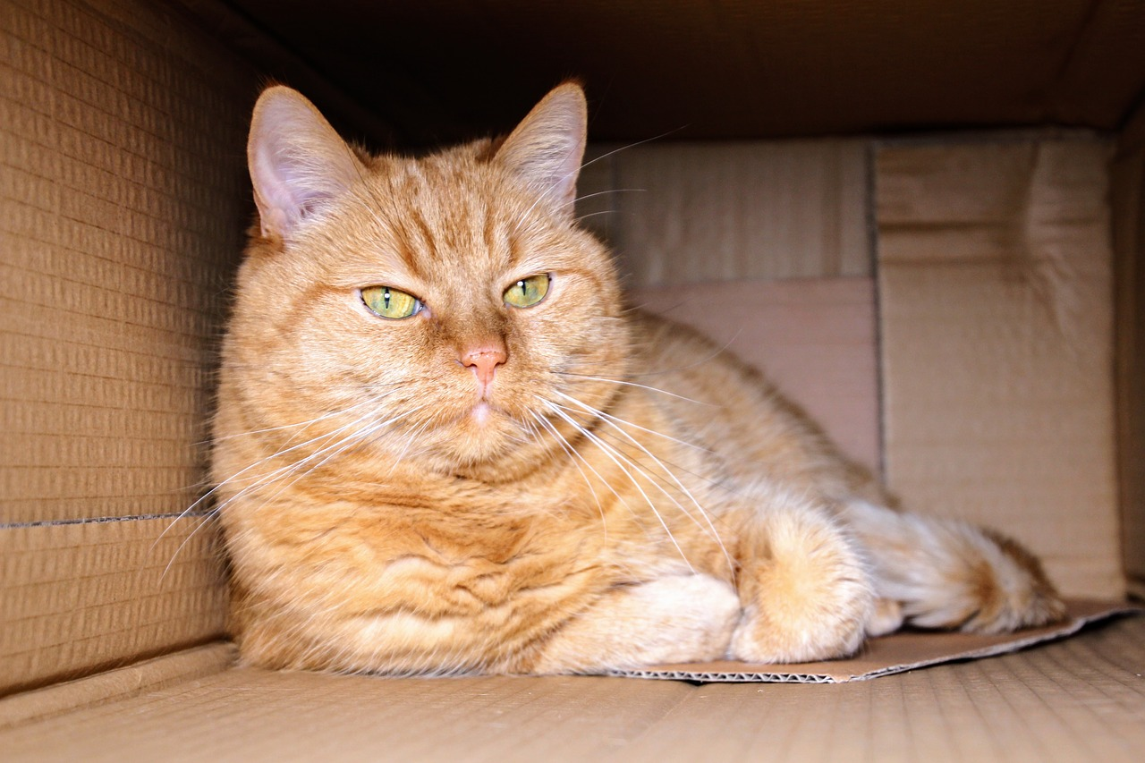 Moving your cat or kitten to your new rental