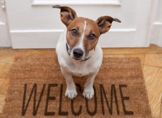 How do I collect a pet bond from my tenant?