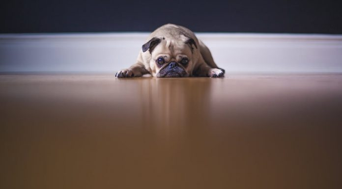 5 reasons hiding a pet from your landlord is a really bad idea