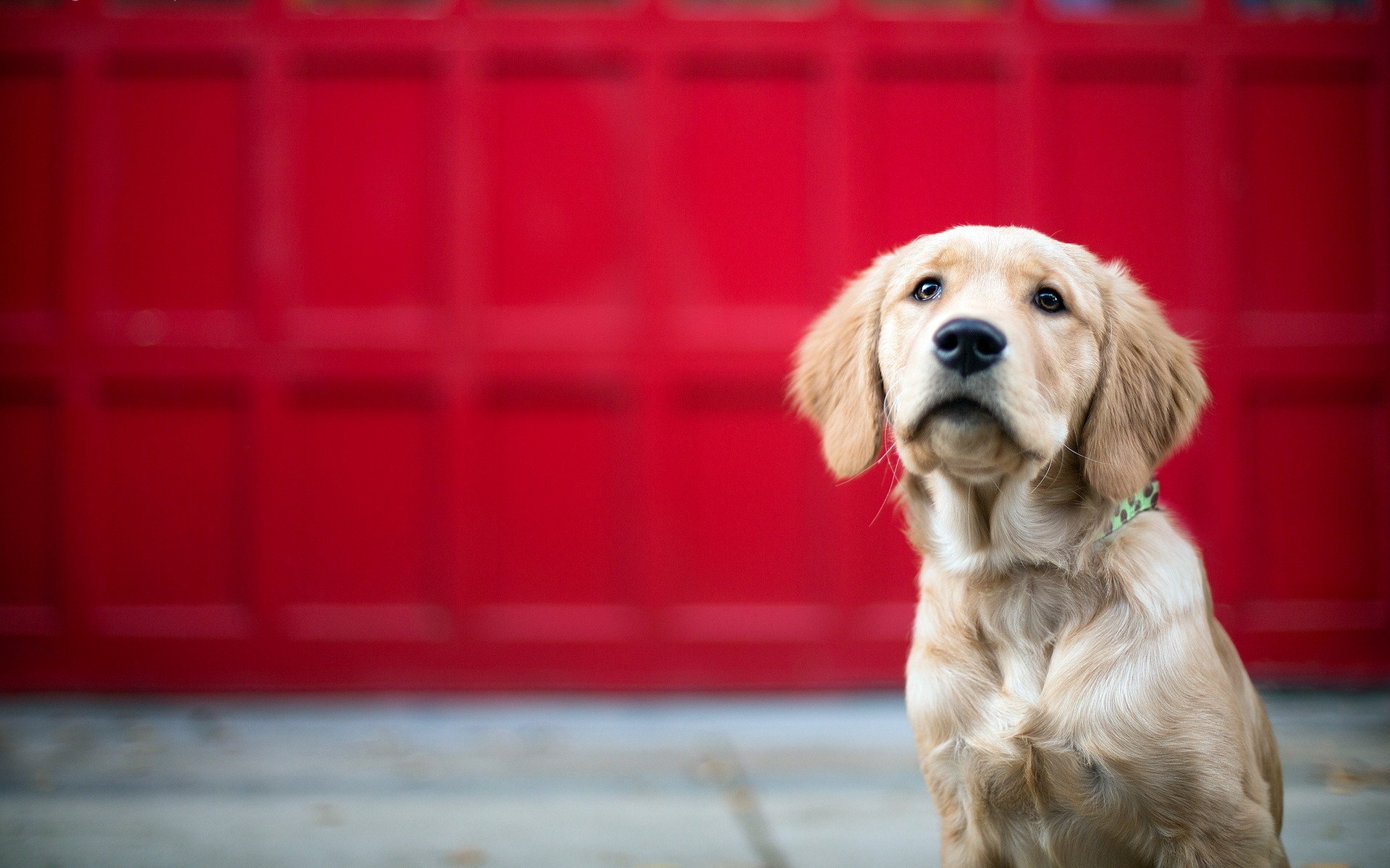 Easy ways to keep your pet dog or cat cool in summer
