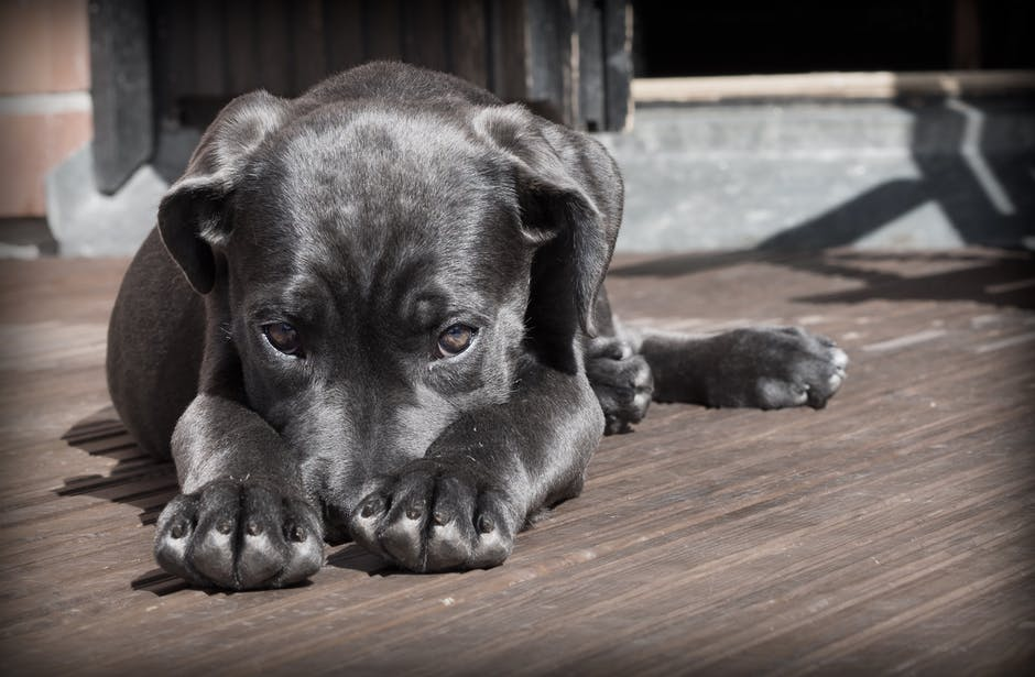 Why dog theft is on the rise – and how you can keep your pet safe