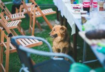 Everything you need to know about entertaining with pets