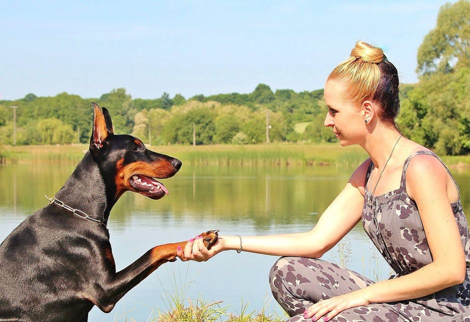 How to talk to your dog – according to science