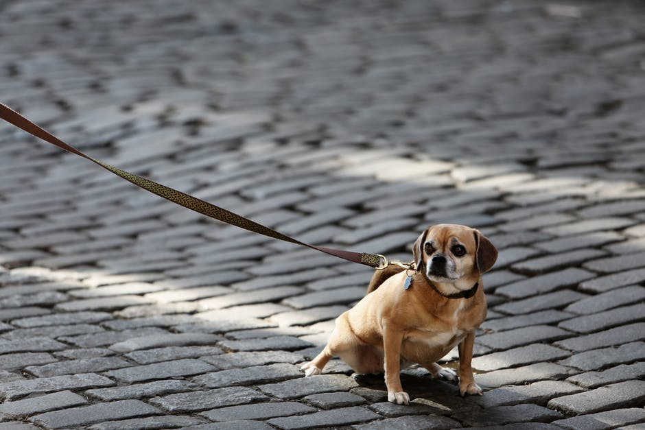 What 'walkies' says about your relationship with your dog