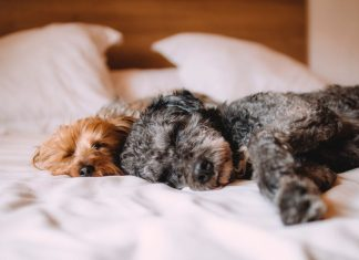 Small-space living with pets: The tips you have to know