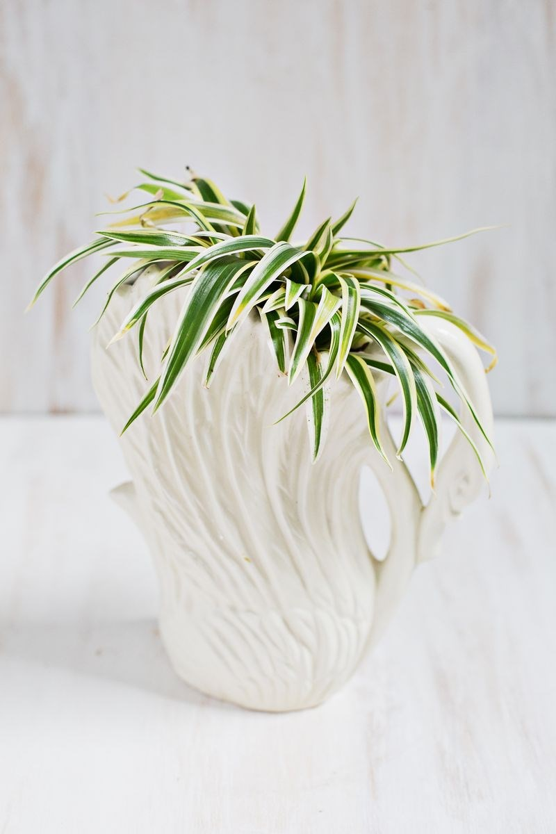 Spider-plant-in-a-swan-planter
