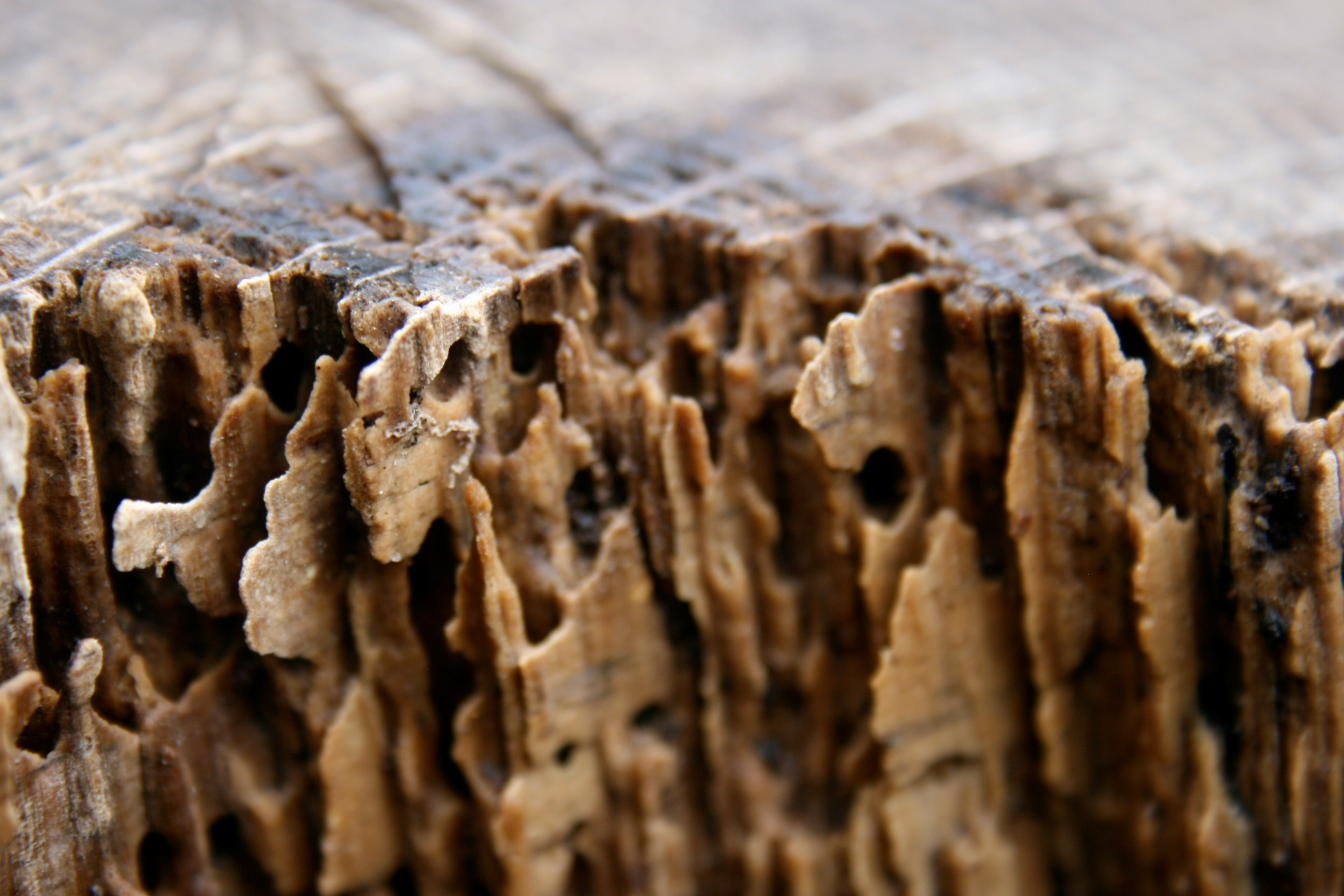 How to Spot Termite Damage 13 Steps with Pictures