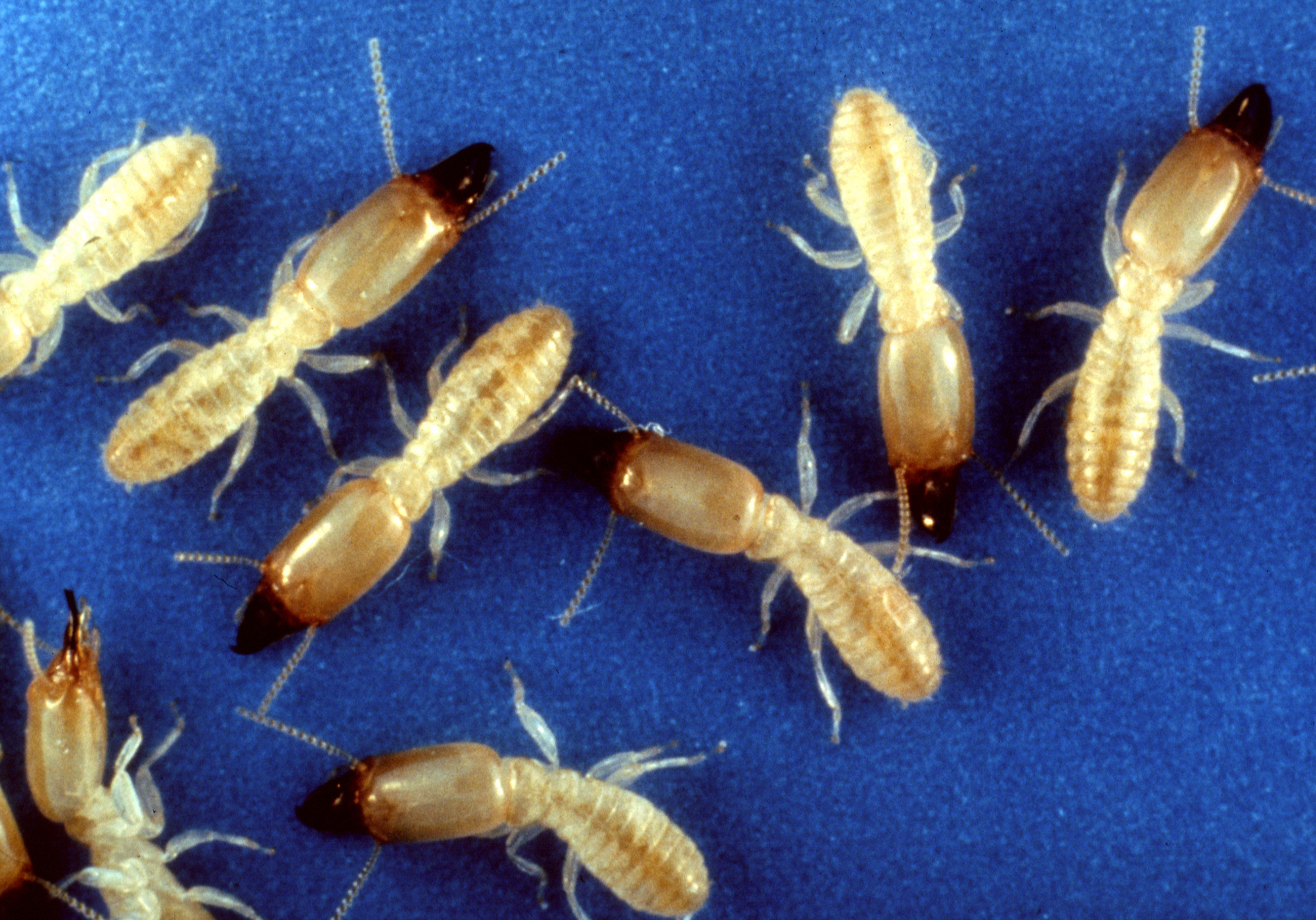 Should I check my investment property for termites?