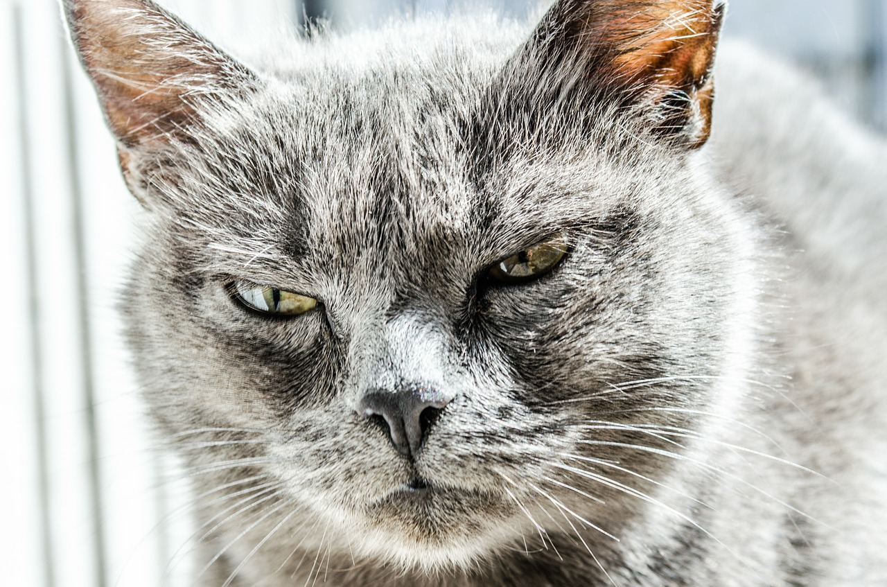 Animal emotions stare us in the face - are our pets happy?