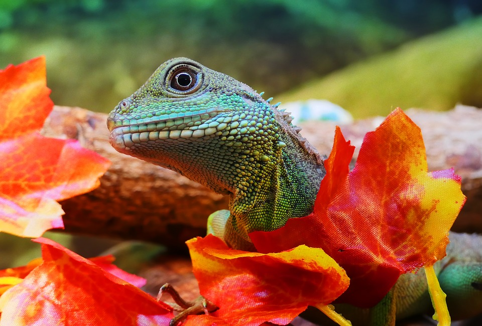 Here's what you need to know about exotic pets in Australia