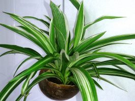 6 stylish houseplants that are safe for cats and dogs