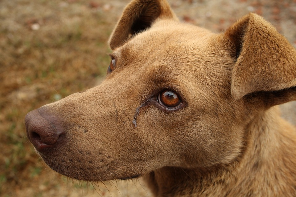 More cats and dogs are living with chronic health conditions