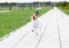 Top tips for helping your pet move in