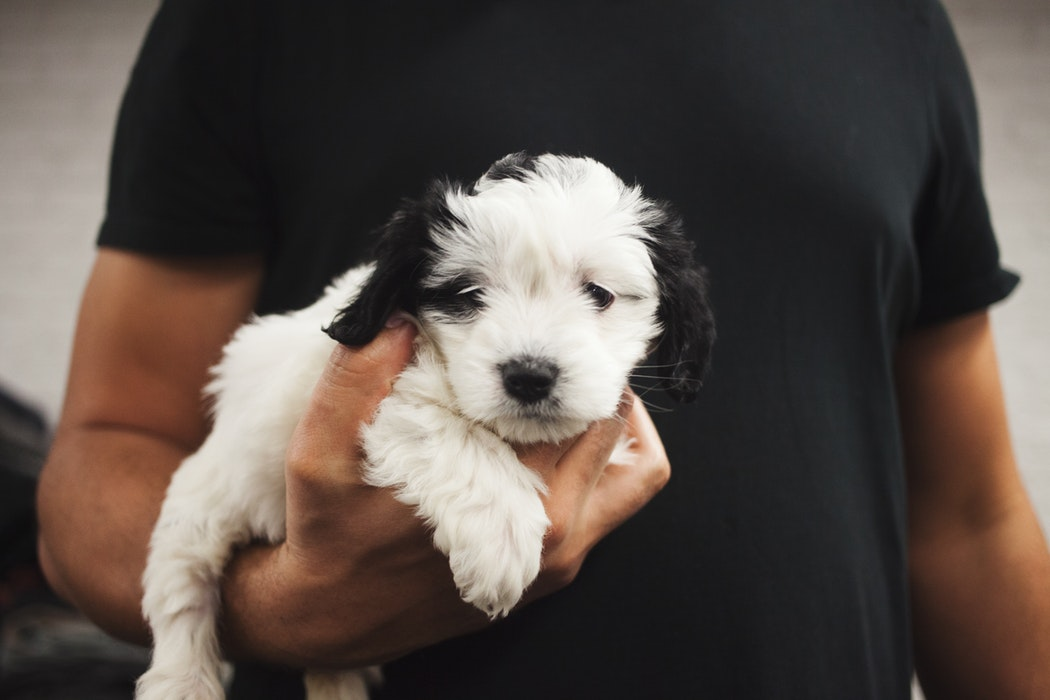 Your Very First Puppy: A Step-by-step Guide