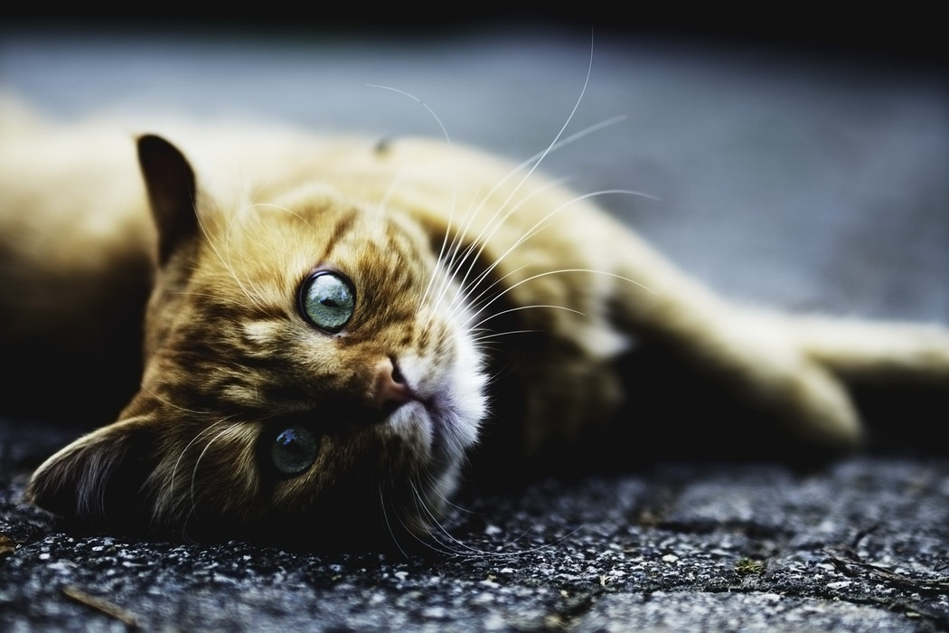 Cat plague is back: Here's what you need to know - Rent Blog