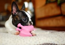 Your very first puppy: Turning around bad habits