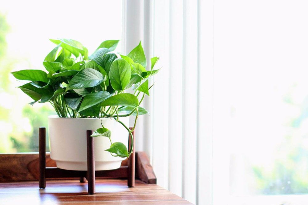 12 indoor plants that will survive a low light room rent blog. Black Bedroom Furniture Sets. Home Design Ideas