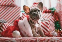 Christmas pet photo competition