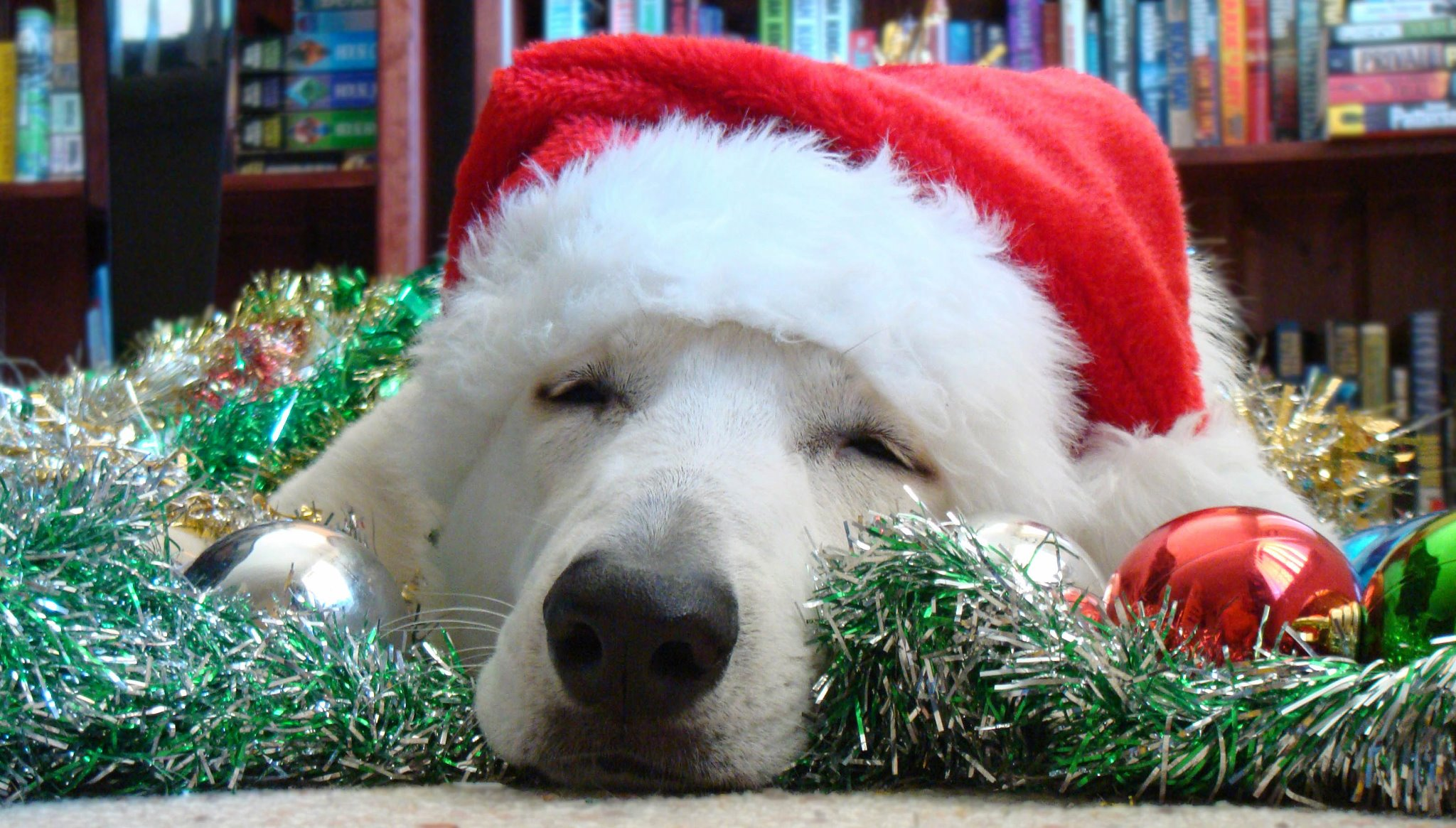 Pet-friendly pets in Christmas costumes