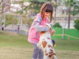 Curious Kids: do cats and dogs understand us when we miaow or bark?