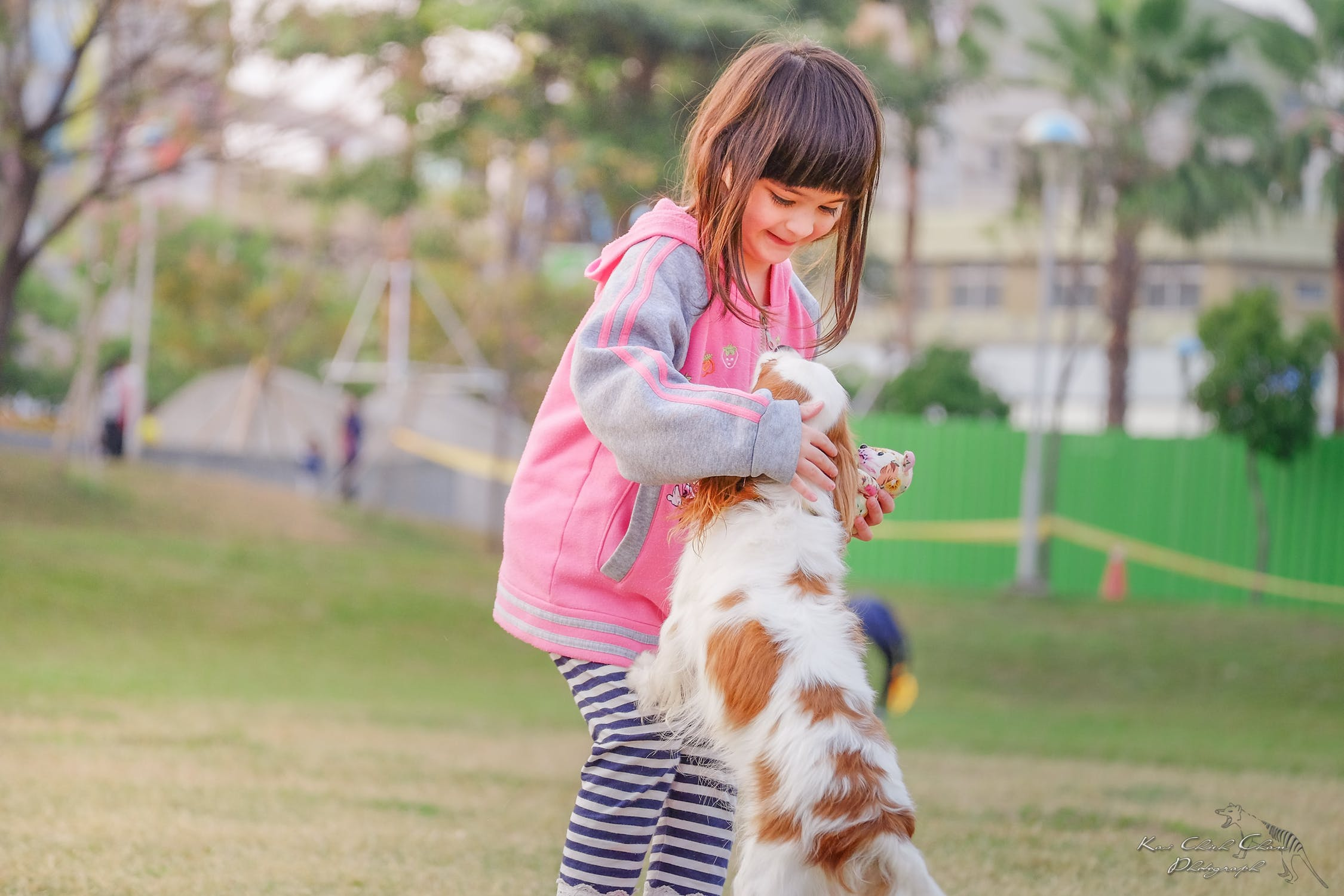 Do cats and dogs understand humans when they make miaowing or barking noises