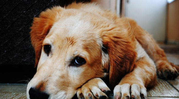 Pet friendly: Can our pet dogs pick up on our current mental state?