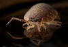 Pest control - who is responsible for pest control in Australian tenancies?
