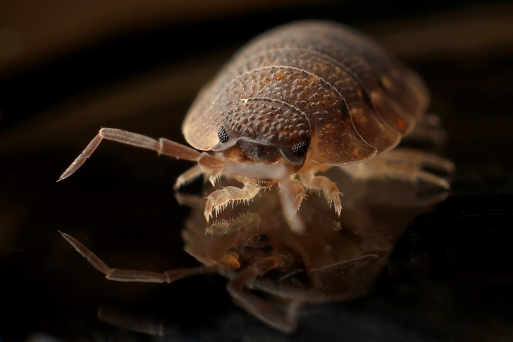 Pests in rentals - who is responsible for pest control in Australian tenancies?