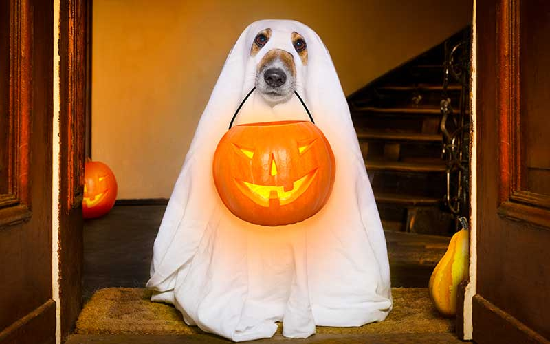 Image result for halloween 2019