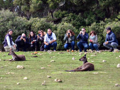 Watching-Kangaroos