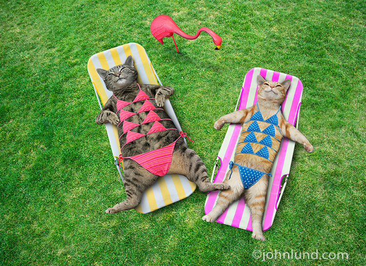 bikini cat