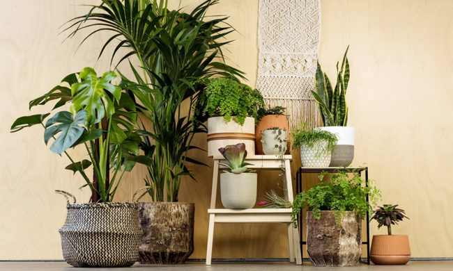 the list of the best indoor plants that u0026 39 ll make your home look gorgeous