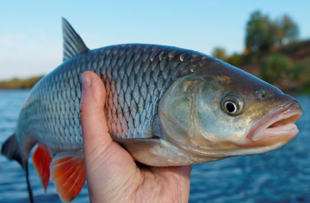 The Fish Always Rots From The Head: Toxic Cultures