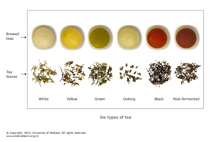 Six Types Of Tea Science Learning Hub