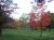 Berrima Remembrance Grove trees along roadside