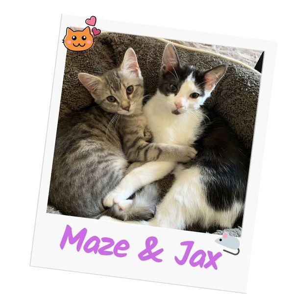 Jax & Maze