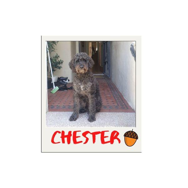Chester Scott