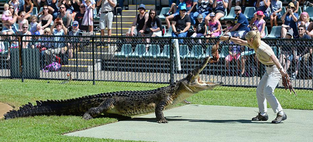 Crocoseum at Australia Zoo installs huge solar system